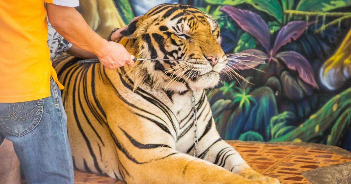 Tiger King fjerner fokus fra en grotesk industri